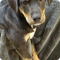 Adopt A Pet :: Anastasia Steele - Racine, WI