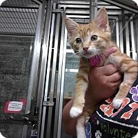 Adopt A Pet :: Thelma - Paducah, KY