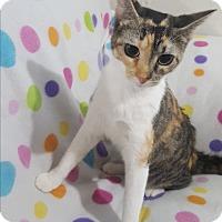 Adopt A Pet :: Carmen - Port Huron, MI