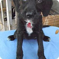 Adopt A Pet :: Panama - Pittsburgh, PA