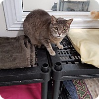 Adopt A Pet :: Patches - Orillia, ON