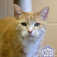 Adopt A Pet :: Tartan - Ann Arbor, MI