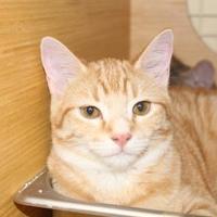 Adopt A Pet :: Theodore - Tucson, AZ