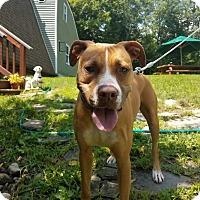 Adopt A Pet :: Emma - Thompson, PA