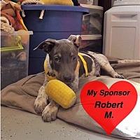 Adopt A Pet :: Brutus - San Leon, TX