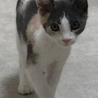 Adopt A Pet :: Vanderbilt - Scottsdale, AZ