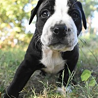 Adopt A Pet :: Baby's Babies - Baby Grand - Fayette, MO