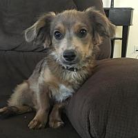 Adopt A Pet :: Jax 6 Months - C/S & Denver Metro, CO