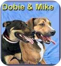 Hound (Unknown Type) Mix Dog for adoption in Aldie, Virginia - Mike
