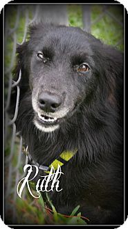 Border Collie Mix Dog for adoption in Vancleave, Mississippi - Ruth