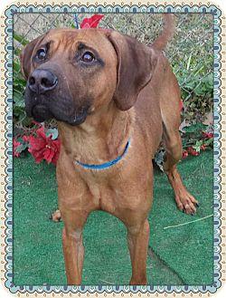 Hound (Unknown Type) Mix Dog for adoption in Marietta, Georgia - EVEREST - see video