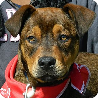 Shepherd (Unknown Type) Mix Dog for adoption in McCormick, South Carolina - Billy