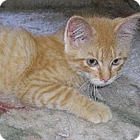 Adopt A Pet :: Jammer - Eldora, IA