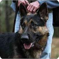 Adopt A Pet :: Kaiser - Conyers, GA