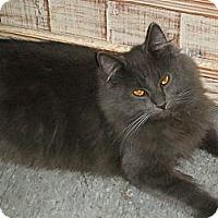 Adopt A Pet :: Thor - lake elsinore, CA