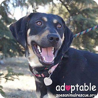 Coonhound Mix Puppy for adoption in Edmonton, Alberta - Anya