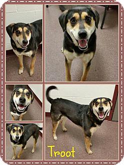 Hound (Unknown Type)/Rottweiler Mix Dog for adoption in Louisburg, North Carolina - Troot