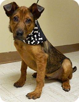 Terrier (Unknown Type, Medium) Mix Dog for adoption in Columbus, Nebraska - Charger