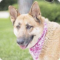 Adopt A Pet :: Inga - Kingwood, TX