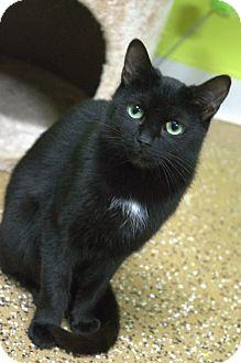 Domestic Shorthair Cat for adoption in Lake City, Michigan - Cat ID# 1724