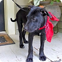 Adopt A Pet :: Ivanhoe - Baton Rouge, LA