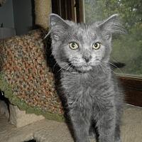 Adopt A Pet :: Rapidash - Milwaukee, WI