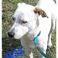 Adopt A Pet :: Jess - Tempe, AZ