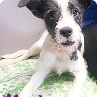 Adopt A Pet :: Maria - Odessa, TX