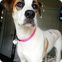 Adopt A Pet :: Tori - Knoxville, TN