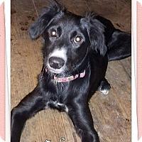 Adopt A Pet :: Sahara - Charlestown, RI