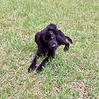 Adopt A Pet :: Melvin - Marianna, FL