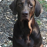 Adopt A Pet :: Captain Morgan - Austin, TX
