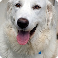Adopt A Pet :: Hailey - Tulsa, OK