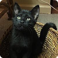 Adopt A Pet :: Phyllis - Caro, MI