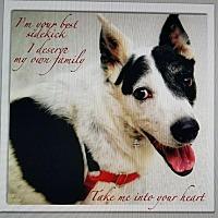 Adopt A Pet :: Hank - Redding, CA