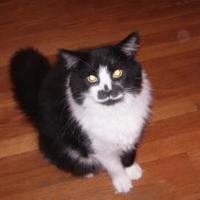 Adopt A Pet :: Bruno - Greensboro, NC