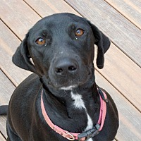 Adopt A Pet :: Remi - Bowie, MD