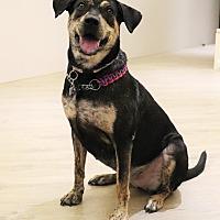 Adopt A Pet :: Fannie - San Mateo, CA