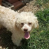 Adopt A Pet :: Macbeth - Spartanburg, SC