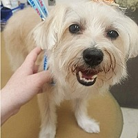 Adopt A Pet :: BeeGee - Toronto, ON