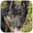 Photo 2 - German Shepherd Dog Dog for adoption in Los Angeles, California - Bonita von Kern