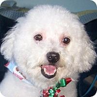 Adopt A Pet :: Sammy - La Costa, CA