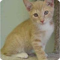 Adopt A Pet :: Mango - Modesto, CA