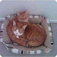 Adopt A Pet :: MaoMao&Mimi - Little Falls, NJ