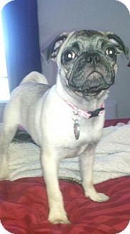 Pug Dog for adoption in Rancho Cucamonga, California - Lucy