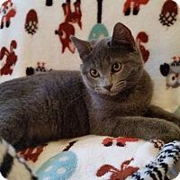 Adopt A Pet :: Artic - Ocala, FL