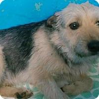Adopt A Pet :: Henry - Pompton Lakes, NJ