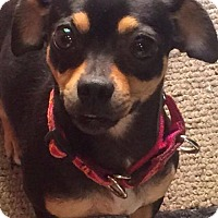 Adopt A Pet :: Zoey - Sinking Spring, PA