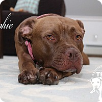 Adopt A Pet :: Sophie - Newtown, CT
