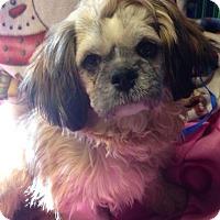 Adopt A Pet :: Nicolas - Kansas city, MO